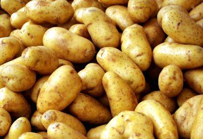 aardappel aardappelen panklaar